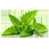 herb-100x100